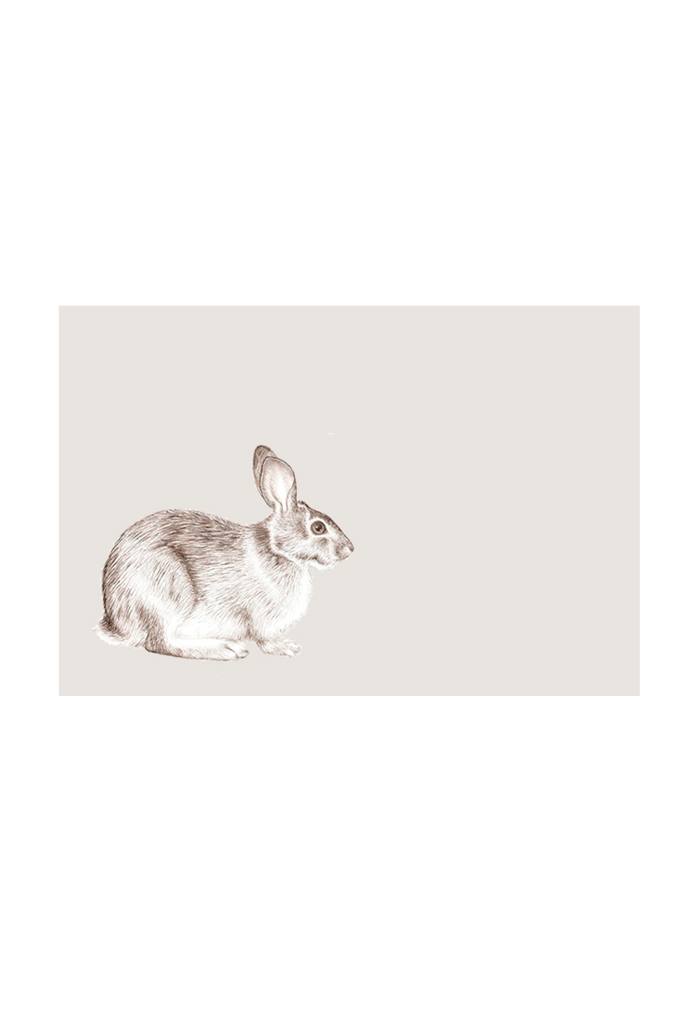 E-arquitectos - white rabbit